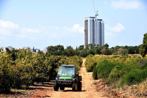 מקווה ישראל   צילום: קובי קואנקס