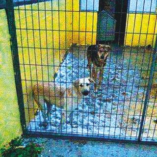 כלבים מחפשים הגנה מפני הקור | צילום: 'גג לחיות'