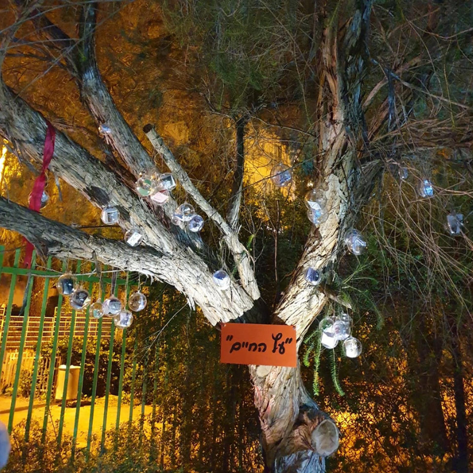 העץ מקושט בזכרונות | צילום פרטי