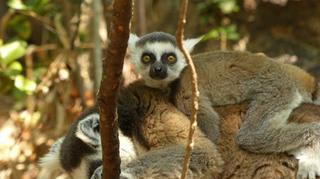 טיול למדגסקר. באדיבות חולות נודדים